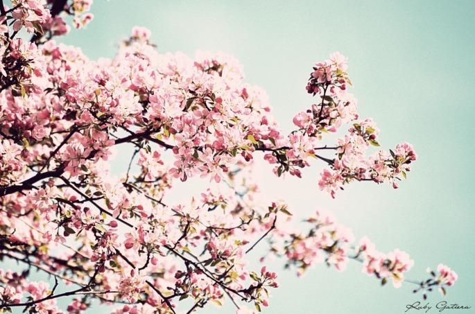 primavera tumblr